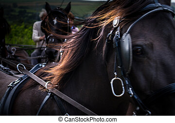Horse pulling carriage - close-up action - Close crop of...