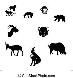 horse, rabbit, goat, saiga, polar bear, cheetah cub, monkey, wild boar,