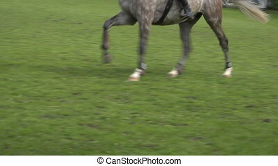 horse race jump close up 02 - Close up of horse during a...