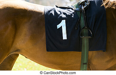 Horse racing, close up on brown horse with number 1