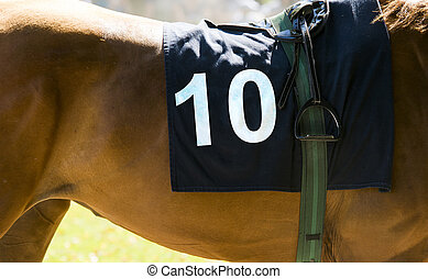 Horse racing, close up on brown horse with number 10