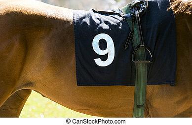 Horse racing, close up on brown horse with number 9