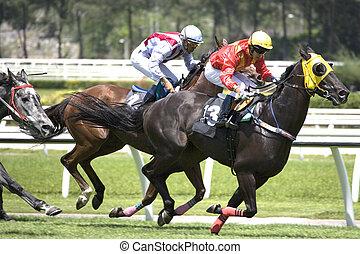 Horse racing at a turf club.