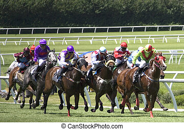 Horse Racing - Horse racing at a turf club.