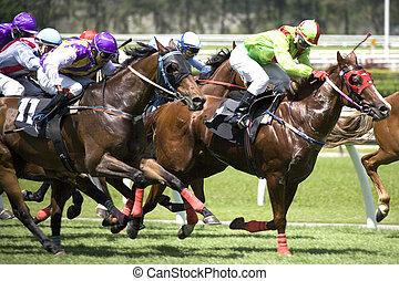 Horse Racing - Horse racing at a turf club.