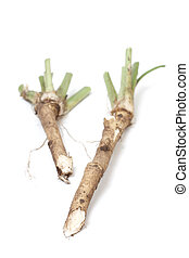 Two roots of horse radish