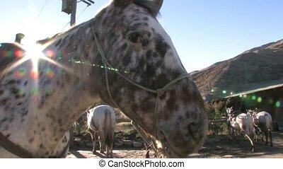 Horse ready to go on trek.