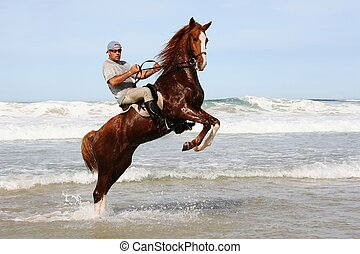 Rearing brown horse and rider in the water at the beach