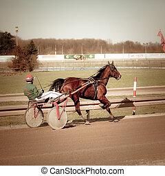 .horse, rennsport, geschirr