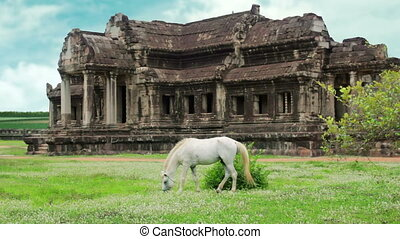 Horse rental in Angkor Wat, retouched