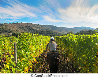 Horse riding in a Vineyard in Chile