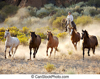 Wrangle rounding up a group of five horses