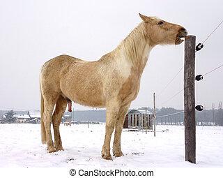 Horse rubbing his teeth