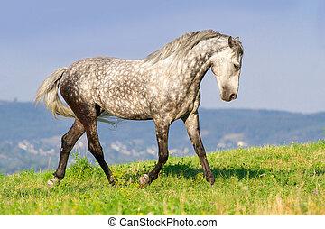 Horse run free