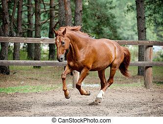 horse running in nature