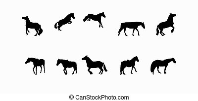 Horse Runs, Hops, Gallops Isolated on White Background