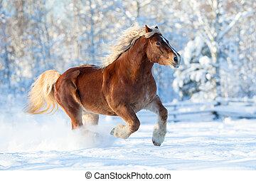 Horse runs on winter background