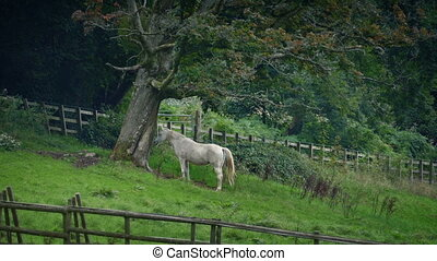 Horse Sheltering Under Tree In The Countryside - White horse...