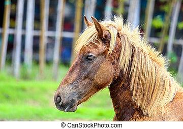 Horse sickness