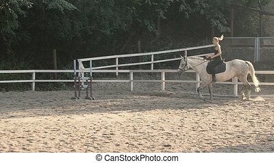 Horse Silhouette. Horse Riding in the Summer Forest