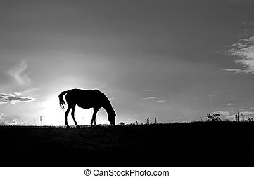 Horse silhouette on hill - White and black