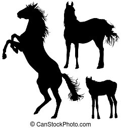 Horse Silhouettes Collection - Black Illustrations, Vector