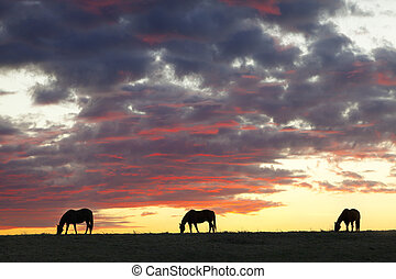 Horse Silhouettes - The silhouettes of three horses against...