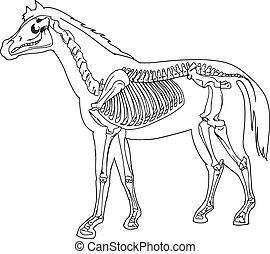 Horse skeleton - Diagram of a horse skeleton
