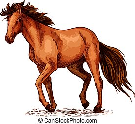 Horse sketch of brown mustang stallion
