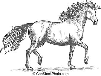 Horse sketch with galloping arabian racehorse