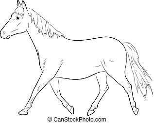 Horse Sketching Vector Illustration