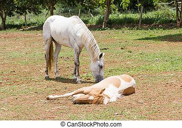 horse sleeping on the ground  in fram