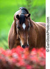 Horse smelling flowers - Brown horse head close up and...