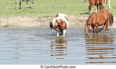 horse splash water