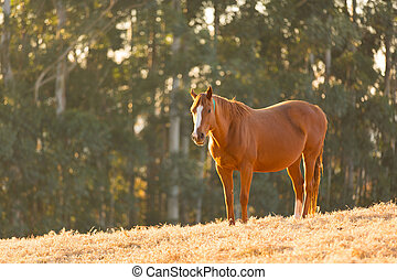 horse standing in the field