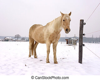 Horse standing in the snow
