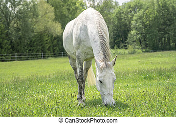 Horse standing on a field with green grass