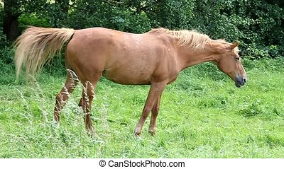 Horse standing on grass