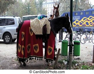 Horse harness with elegant fabric