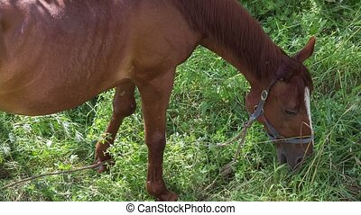 Horse - horse is grazed on a meadow