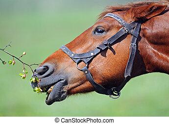 Horse - portrait of Horse