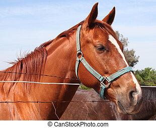 Horse - Beautiful Horse Profile