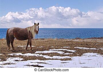 Horse stood on shore of Issyk Kul