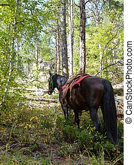 Horse tied among fall color trees