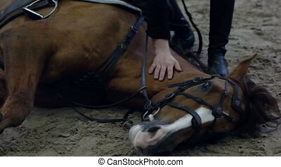 Horse to lay down. Asking a horse to lie down when riding....