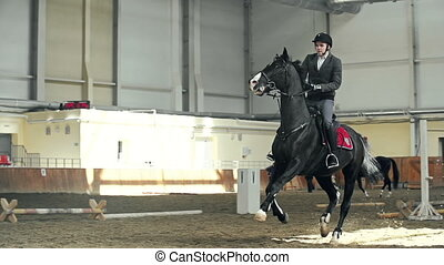 Horse Training - Tracking shot of black horse jumping over...