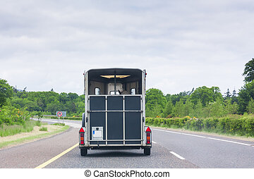 Horse transport on motorway