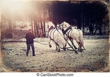 horse trener in winter landscape, old photo effect. - horse ...