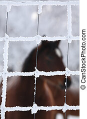 Horse viewed through frost covered wire fence