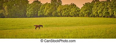 Horse walking across a field at sunset.